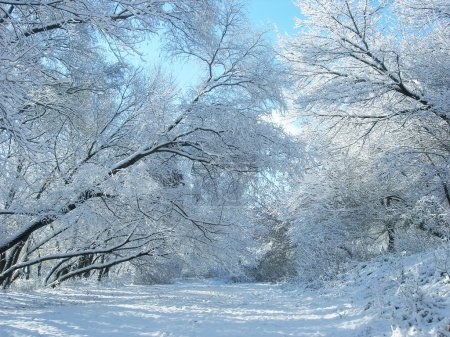 Winter snow and trees